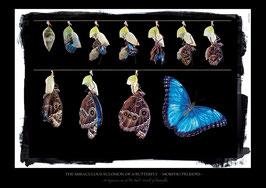 "Künstlerisches/Pädagogisches Plakat ""THE MIRACULOUS ENCLOSION OF A BUTTERFLY - MORPHO PELEIDES""   - P016/1"