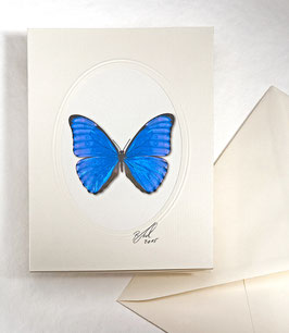 "Kunstkartenset 2Schmetterling"" AT-0012 - Morpho aurora -"