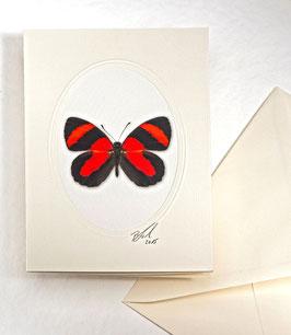 "Kunstkartenset ""Schmetterling"" AT-0011 - Callicore cynosura -"