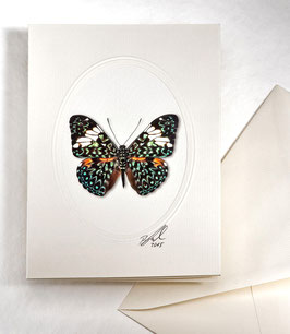 "Kunstkartenset ""Schmetterling"" AT-0015 - Hamadryas amphione -"