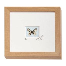 "AD-0031- Kunstdruck ""Schmetterling"" im Naturholzrahmen ""Natur"" 15 x 15 cm"