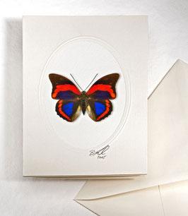 "Kunstkartenset ""Schmetterling"" AT-0020 - Prepona praeneste bucklevana -"
