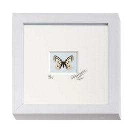 """AD-0031 - Kunstdruck """"Schmetterling"""" im Naturholzrahmen """"weiss"""" 15 x 15 cm"""