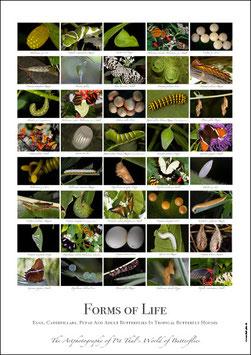 """Künstlerisches/Pädagogisches Plakat """"Forms of Life"""" - P010/04"""