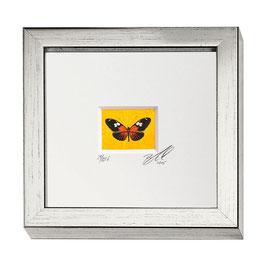 """AD-0032 - Kunstdruck """"Schmetterling"""" im Naturholzrahmen """"Silber"""" 15 x 15 cm"""