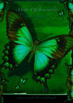 "Künstlerisches Plakat ""Magic Of Immortality"" - P 018/01 -"