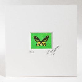 """AD-0033 - Kunstdruck """"Schmetterling"""" im Passepartout 15 x 15 cm, ohne Bilderrahmen"""