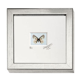 """AD-0031 - Kunstdruck """"Schmetterling"""" im Naturholzrahmen """"Silber"""" 15 x 15 cm"""