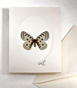 "Kunstkartenset ""Schmetterling"" AT-0023 - Parnassius apollo -"