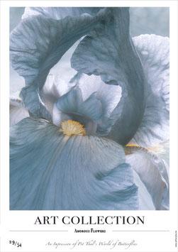 AMOROUS FLOWERS - AC 29/54 - F -