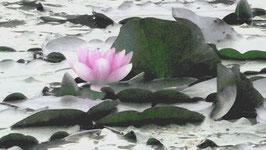 Waterflower - FW 10-18 -