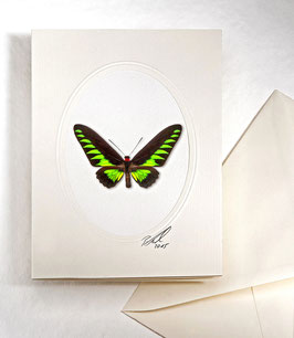 "Kunstkartenset ""Schmetterling"" AT-0017 - Troides trojana -"