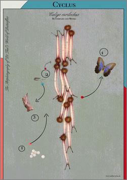 """Künstlerisches Plakat """"Cyclus"""" - P009/02"""