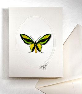"Kunstkartenset ""Schmetterling"" AT-0018 - Ornitopthera paradisea -"