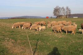 Lammrücken