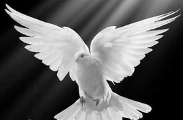 Einweihung und Krönung in die weisse Priesterschaft