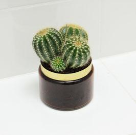 Luxury Jar Cactus. Zonder tekst