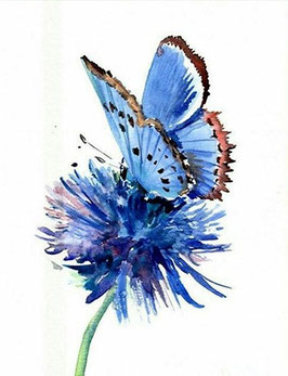 Vlinder op bloem - H18122