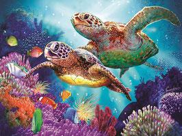 Zeeschildpadden - D18166