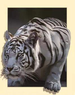 Witte tijger - D18189