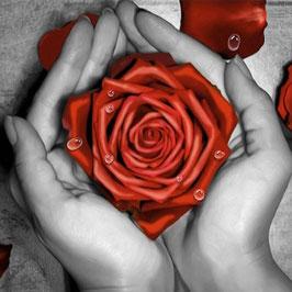 Roos in handen - H18190