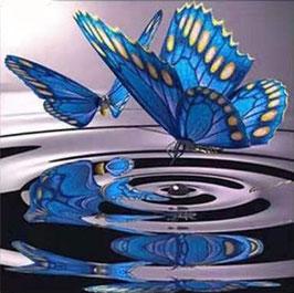 Blauwe vlinders - D18188