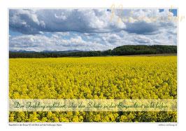 Postkarten-Bündel: Die 4 Jahreszeiten - 4