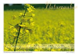 Postkarten-Bündel: Die 4 Jahreszeiten - 5