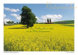 Postkarten-Bündel: Die 4 Jahreszeiten - 2