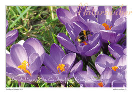 Postkarten-Bündel: Die 4 Jahreszeiten - 3