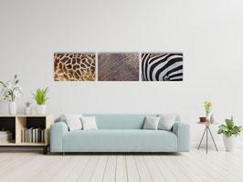 Safari-set: 12x kleurrijk