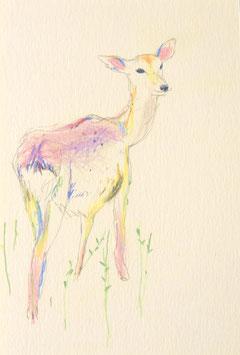 ふりむき鹿さんポストカード