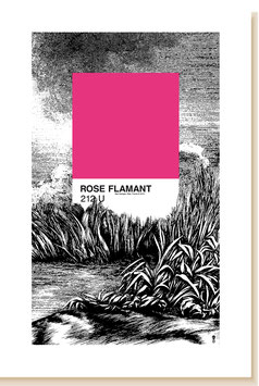 ROSE FLAMANT