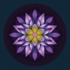 FLOROSCOPE Lotus