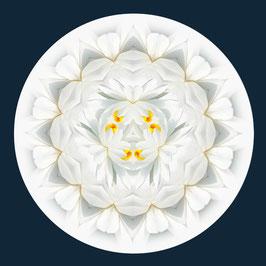 FLOROSCOPE Whiter Lily