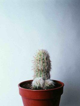 """""""Un cactus más"""", Juan Hidalgo"""