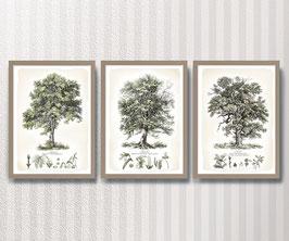Bäume 3er-Set