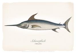 Schwertfisch - ab 9,90 €