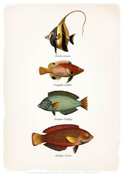 Fische - Prachtfische - ab 9,90 €