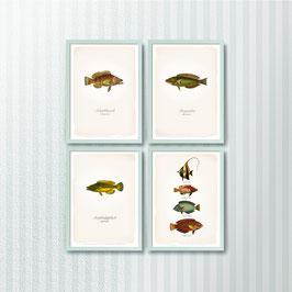 Fische 4er-Set