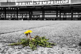 Foto-Nr. Berlin_2018_10