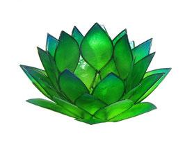 Lotus-Licht -  Morgentau