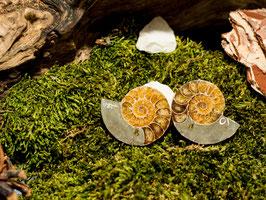 Ammonitenpaar - Top Qualität