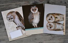 Herzeule Postkarten Set 1
