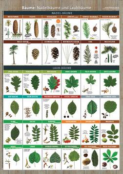 """Lernplakat """"Bäume"""""""