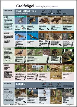 Greifvögel: Für Jäger- und Falknerprüfung