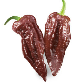 Peperoncino piccante SUPER HOT Naga Morich chocolate