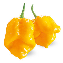 Peperoncino piccante SUPER HOT Trinidad Scorpion giallo