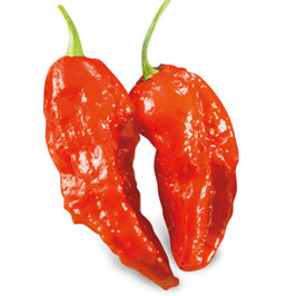 Peperoncino piccante SUPER HOT Big Naga Assam (Bhut Jolokia)