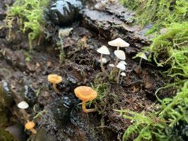 Patenschaft für ein Stück Waldboden